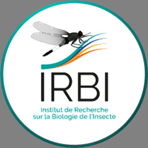 Irbi_New.png